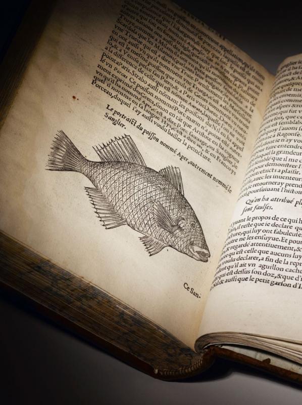 Belon poissons 07