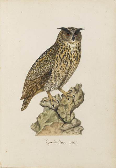 Lemetteil oiseaux 11