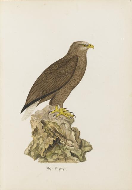 Lemetteil oiseaux 12