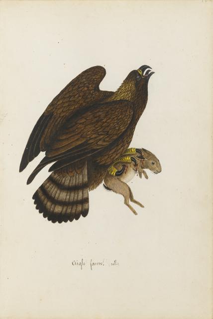 Lemetteil oiseaux 13