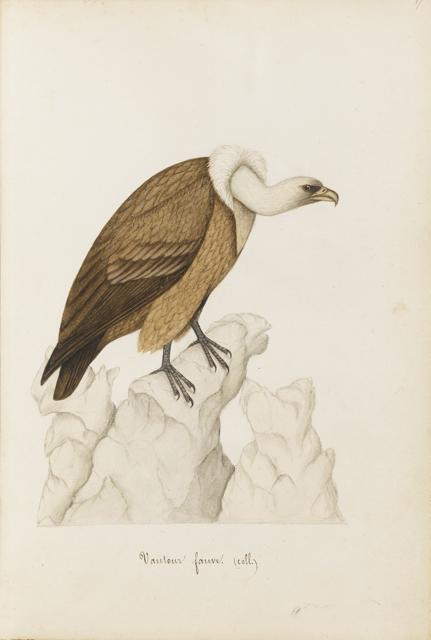 Lemetteil oiseaux 14