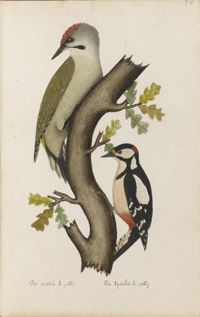 Lemetteil oiseaux 17