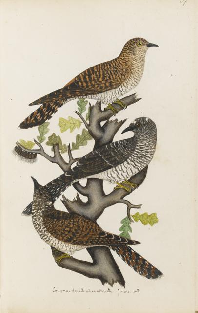 Lemetteil oiseaux 18