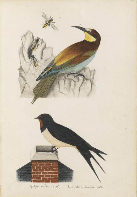 Lemetteil oiseaux 19