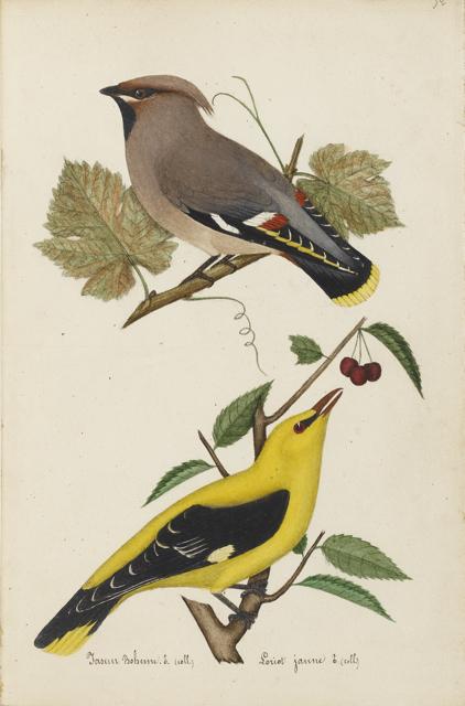 Lemetteil oiseaux 20