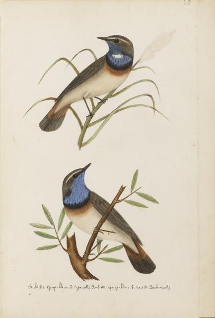 Lemetteil oiseaux 21