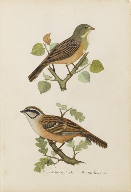 Lemetteil oiseaux 23