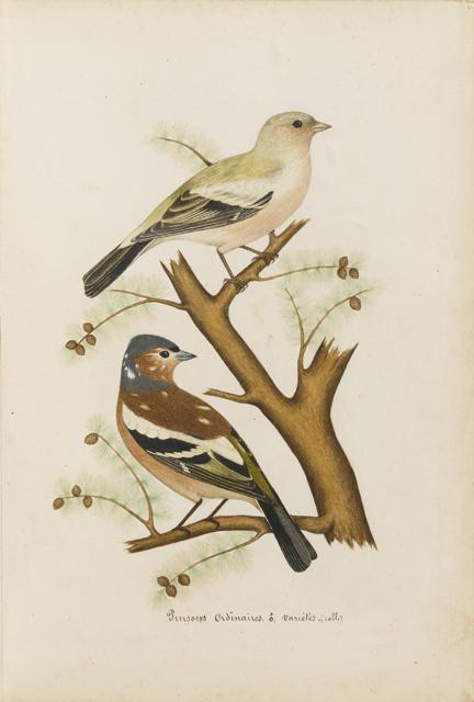 Lemetteil oiseaux 24