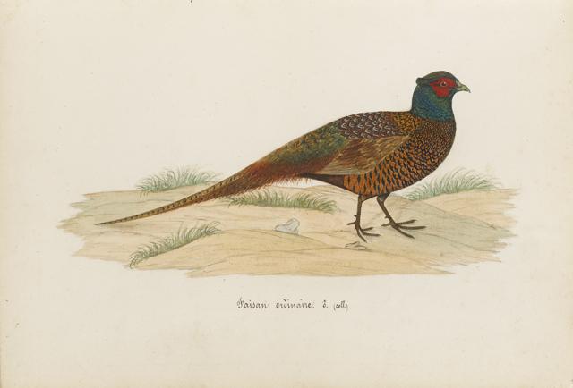 Lemetteil oiseaux 27