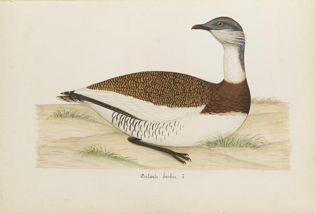 Lemetteil oiseaux 28