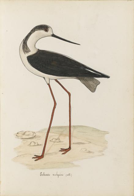 Lemetteil oiseaux 29