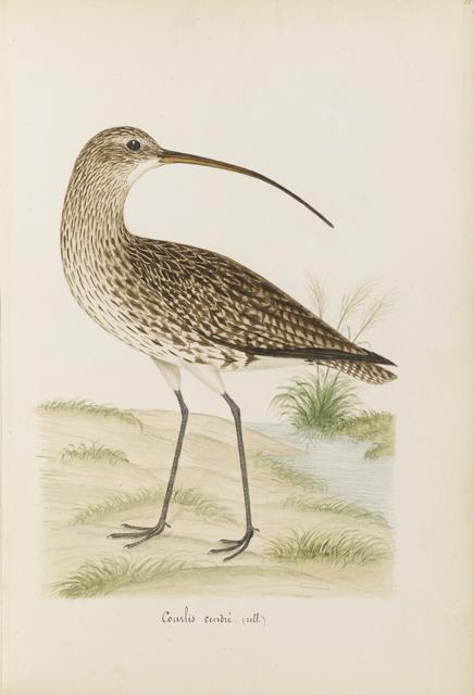 Lemetteil oiseaux 30