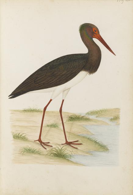 Lemetteil oiseaux 31