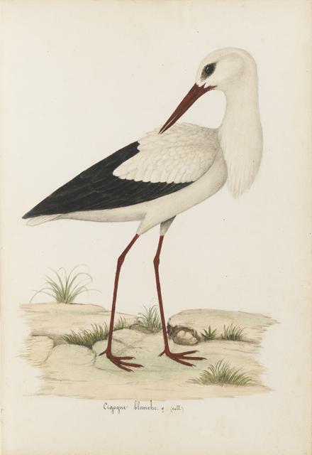 Lemetteil oiseaux 32