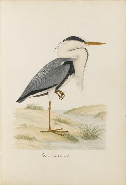 Lemetteil oiseaux 33