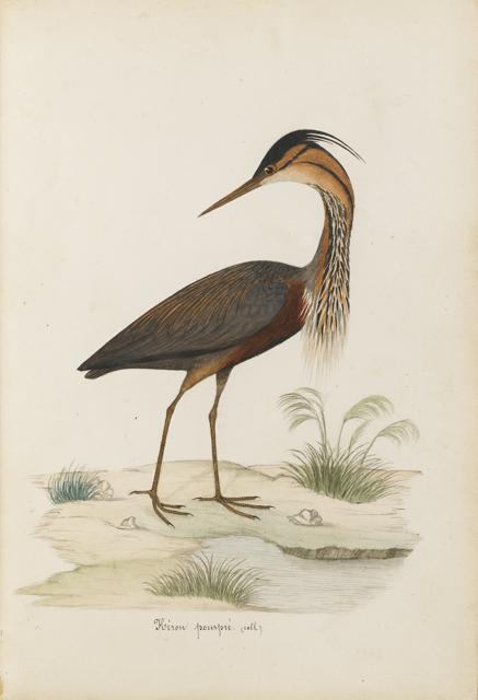 Lemetteil oiseaux 34